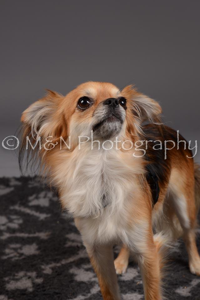 M&N Photography -DSC_2235