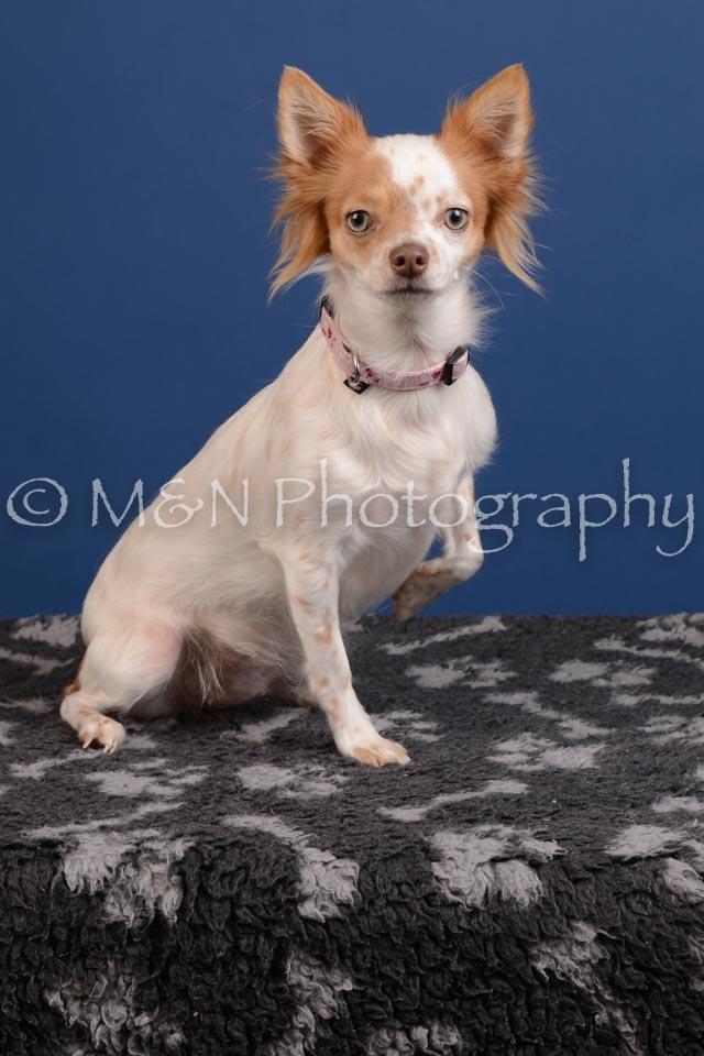 M&N Photography -DSC_5145