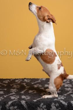 M&N Photography -DSC_4754