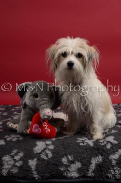 M&N Photography -DSC_8393