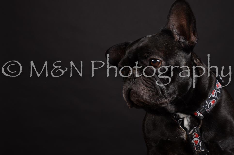 M&N Photography -DSC_5668