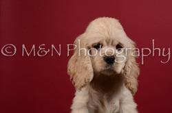 M&N Photography -DSC_3610