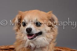 M&N Photography -DSC_2001