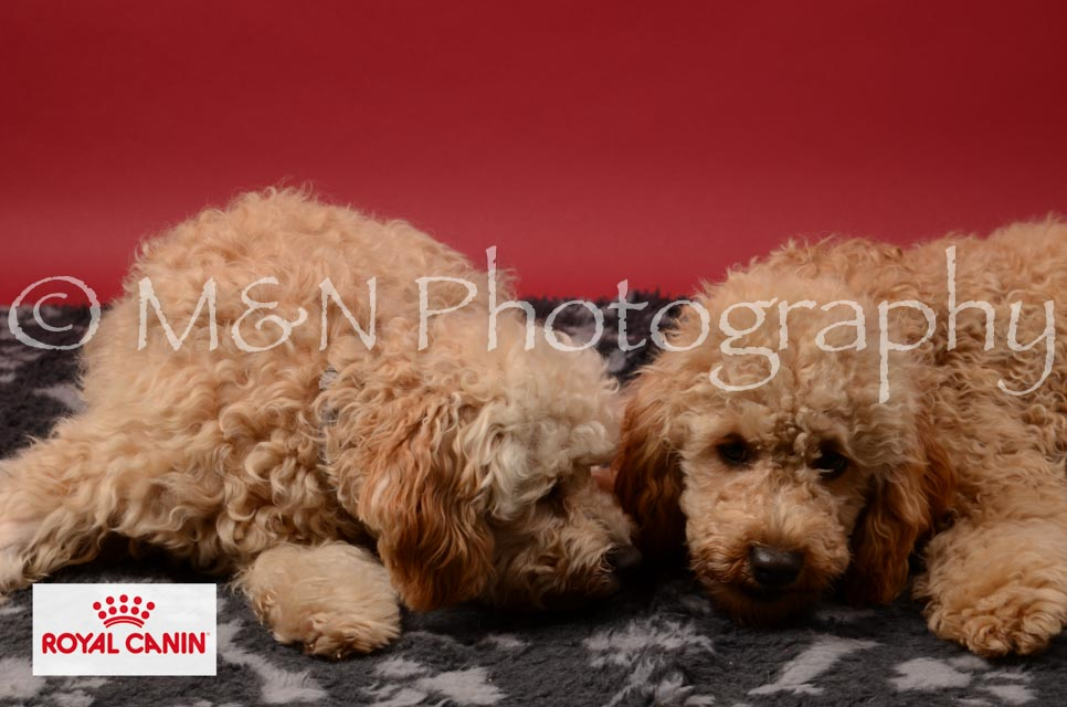 M&N Photography -M&N Photography-DSC_6714