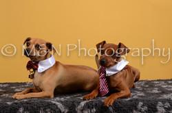M&N Photography -DSC_4652