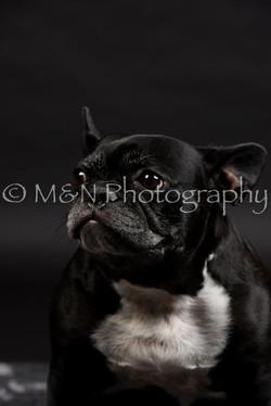 M&N Photography -DSC_2403