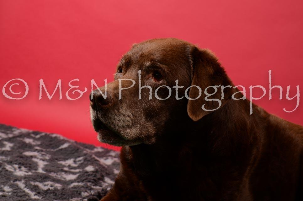 M&N Photography -DSC_6623