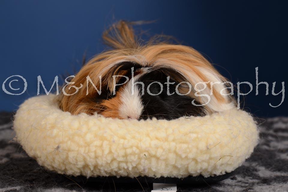 M&N Photography -DSC_5334
