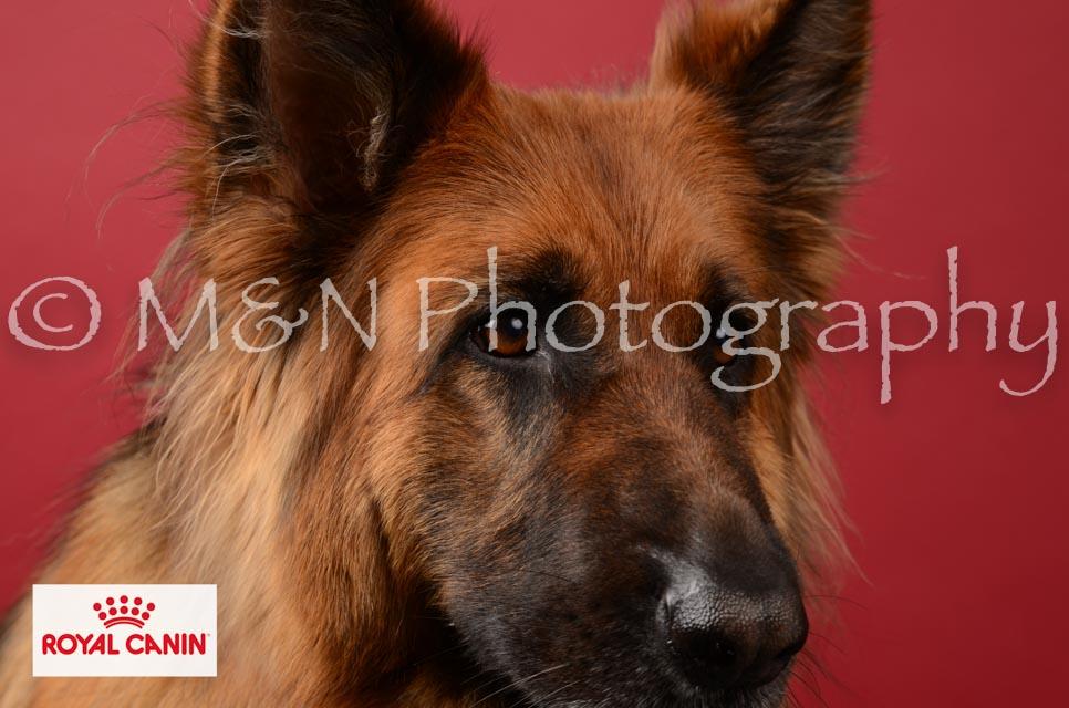 M&N Photography -M&N Photography-DSC_6836