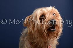 M&N Photography -DSC_3878