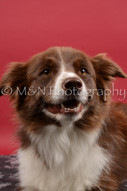 M&N Photography -DSC_8515
