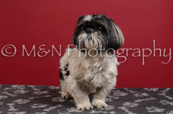 M&N Photography -DSC_3592