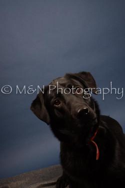 M&N Photography -DSC_4169