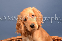 M&N Photography -DSC_4287