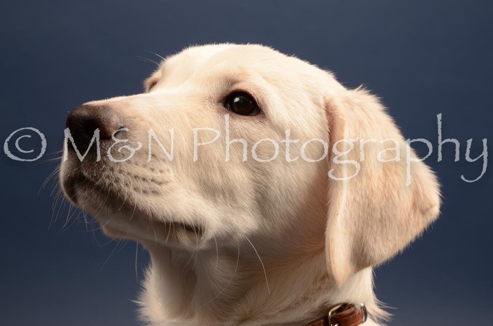 M&N Photography -DSC_4397