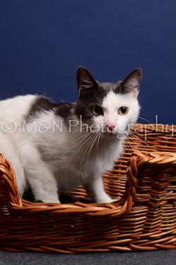 M&N Photography -IMG_4482