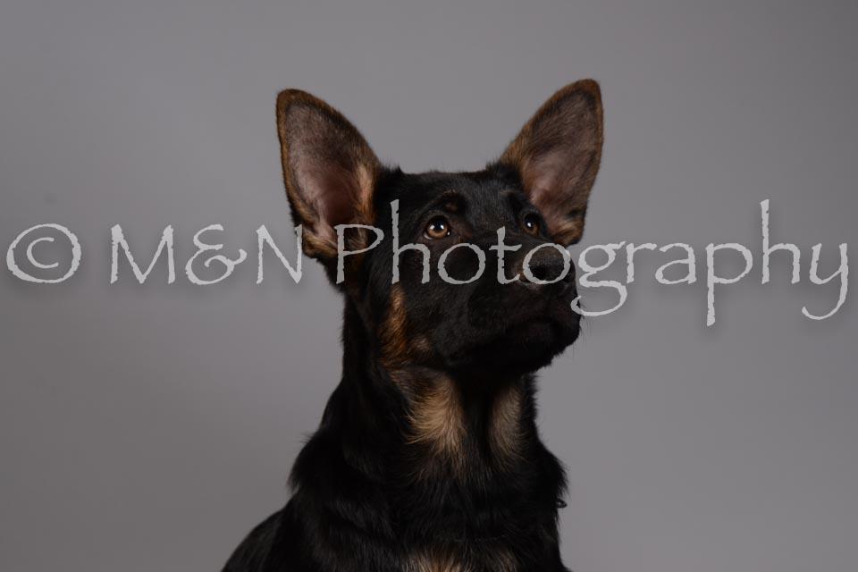 M&N Photography -DSC_2388
