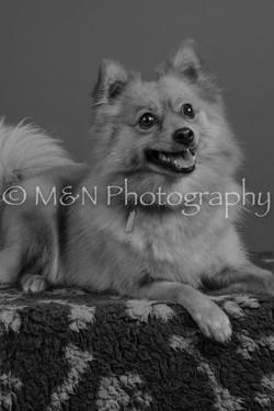 M&N Photography -DSC_5377
