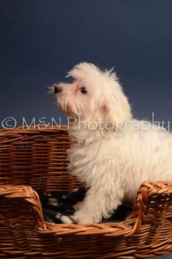 M&N Photography -DSC_4405