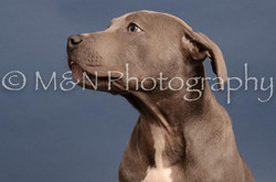 M&N Photography -DSC_4311