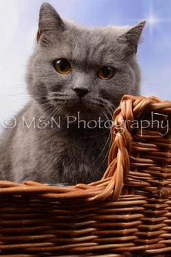 M&N Photography -DSC_6989