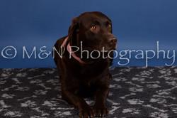 M&N Photography -DSC_5127