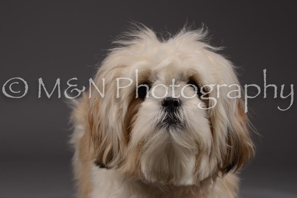 M&N Photography -DSC_2043
