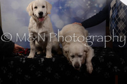M&N Photography -DSC_7105
