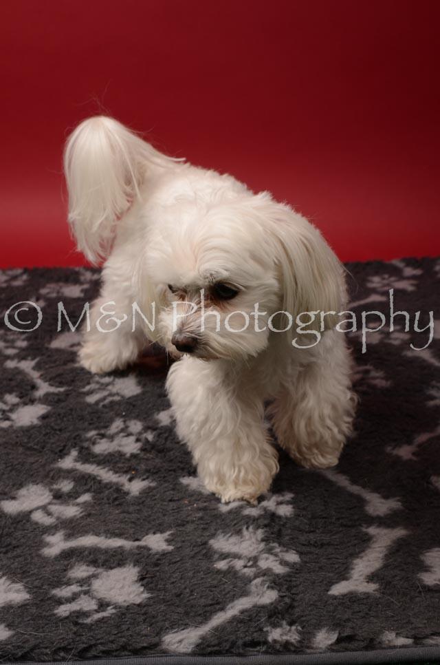 M&N Photography -DSC_6831
