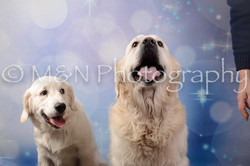 M&N Photography -DSC_7135