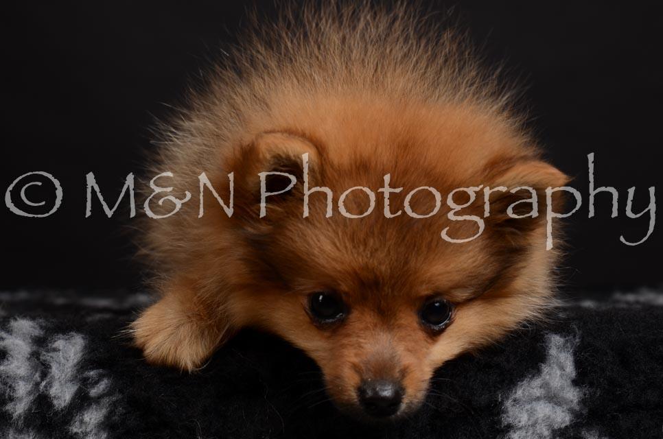 M&N Photography -DSC_5672