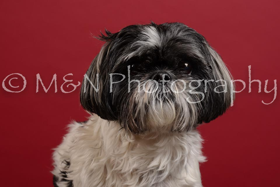 M&N Photography -DSC_3591