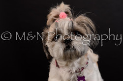 M&N Photography -DSC_5991