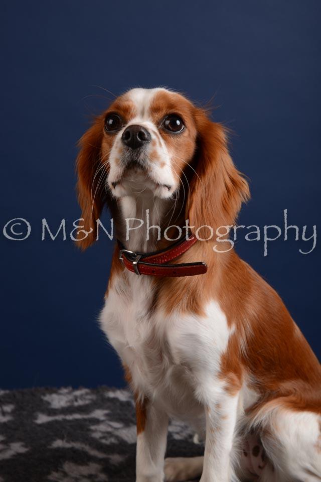 M&N Photography -DSC_4038