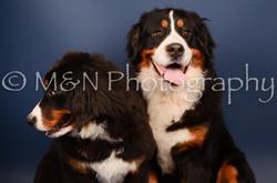 M&N Photography -DSC_3830