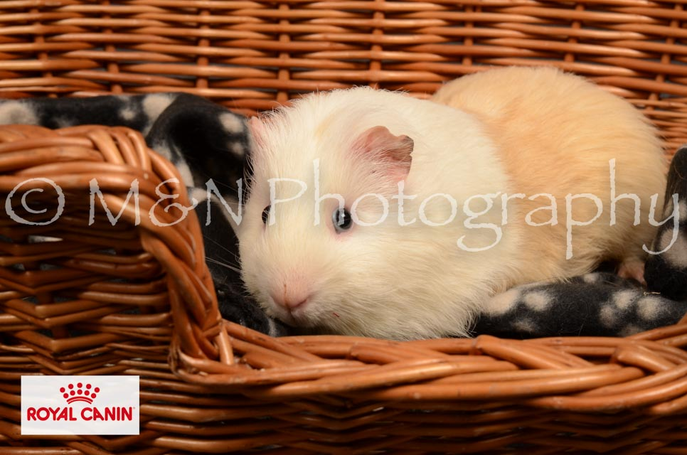 M&N Photography -DSC_4680-2