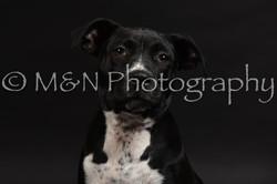M&N Photography -DSC_2655