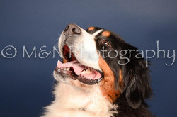 M&N Photography -DSC_3803