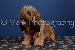 M&N Photography -DSC_5263