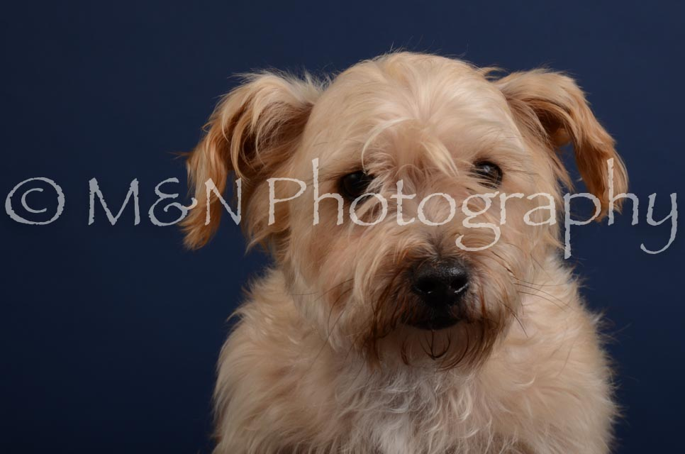 M&N Photography -DSC_3855