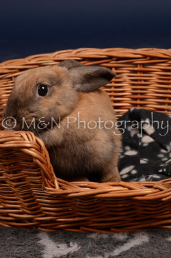M&N Photography -DSC_0762