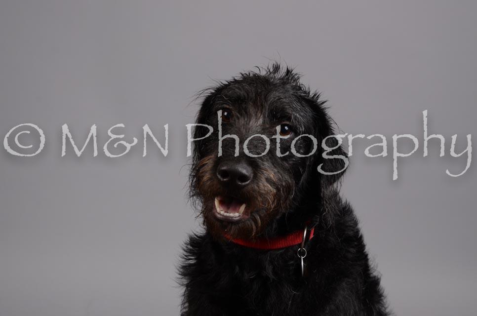 M&N Photography -DSC_2960