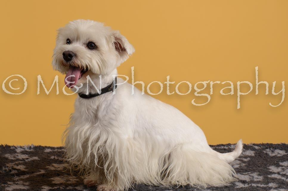 M&N Photography -DSC_4815