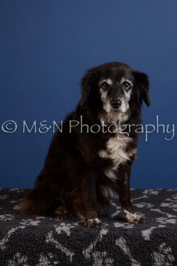 M&N Photography -DSC_4886