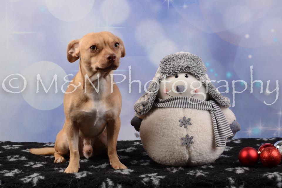 M&N Photography -DSC_6748