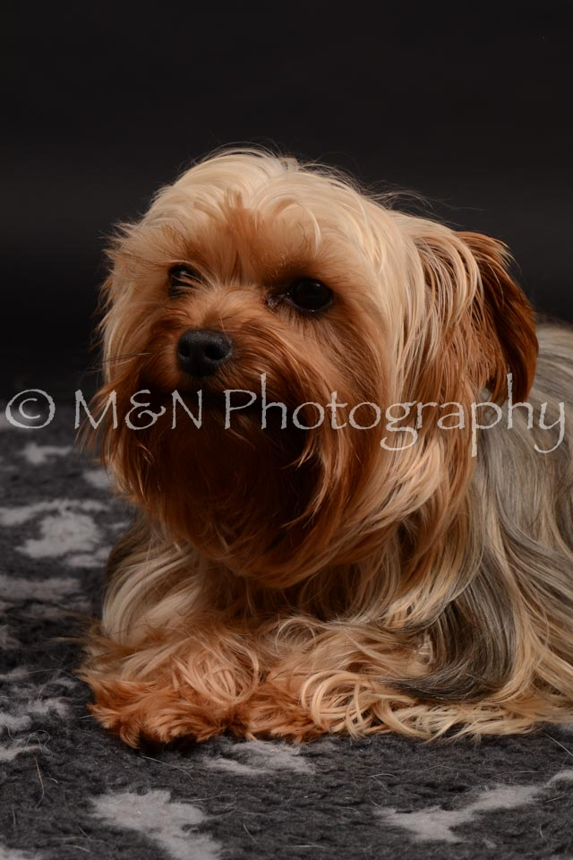 M&N Photography -DSC_9705