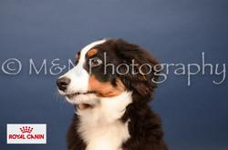 M&N Photography -DSC_4089-2