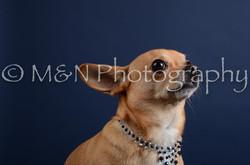 M&N Photography -DSC_3834