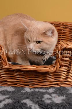 M&N Photography -DSC_4795