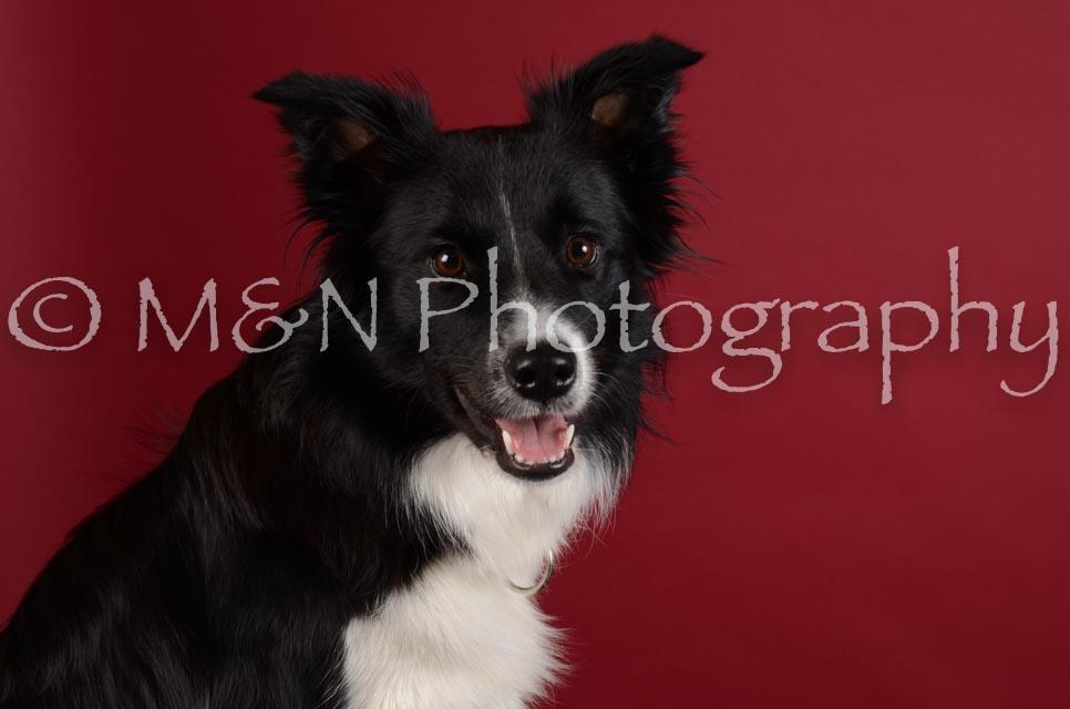 M&N Photography -DSC_3050